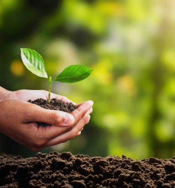 Beneficiile Pentru Sănătate Ale Agriculturii Organice | Zicala.ro